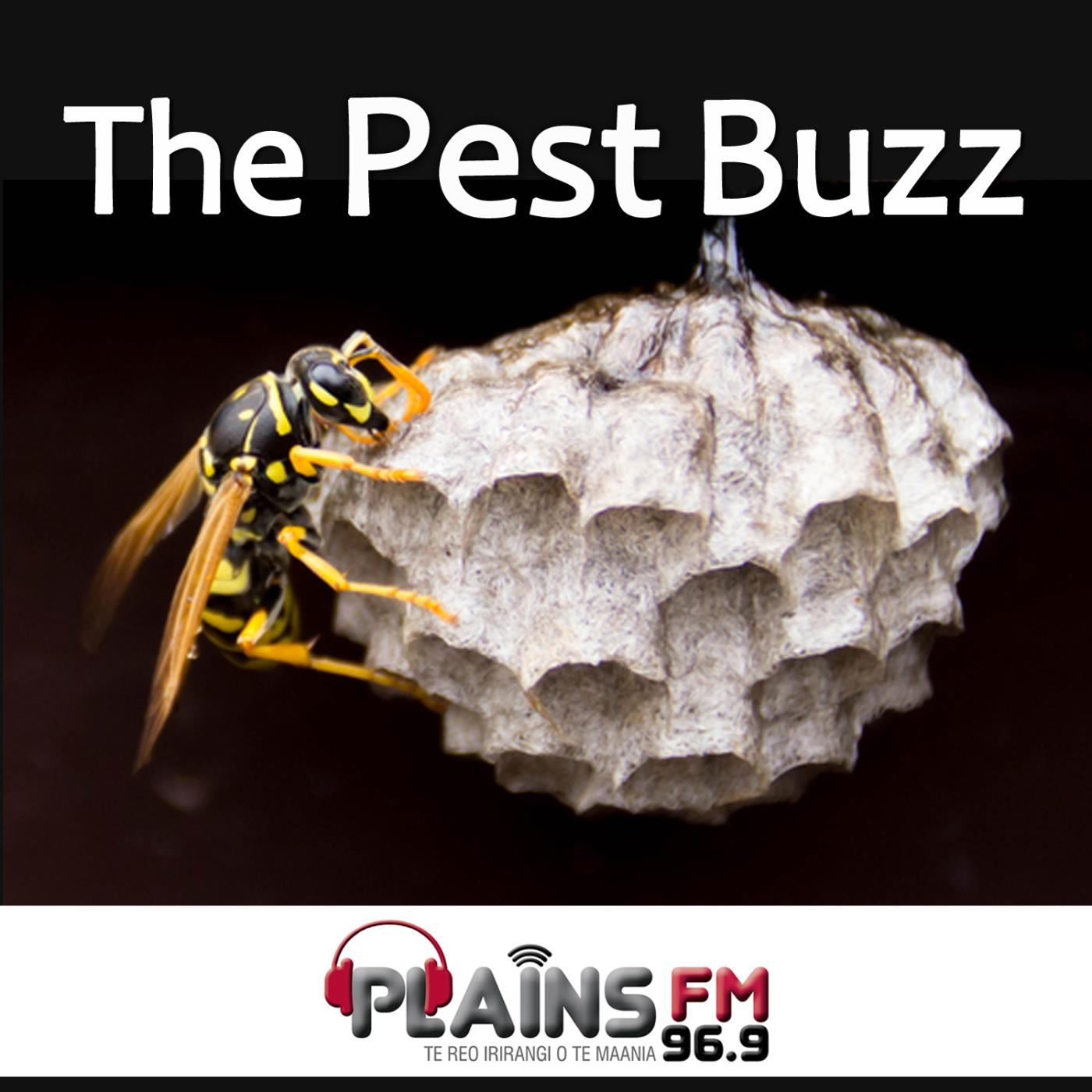 The Pest Buzz